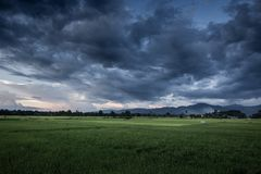 Dark stormy clouds. Dark stormy clouds over rice field royalty free stock photography