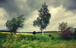 Cloudy windy summer landscape with trees . royalty free stock photography