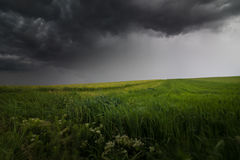 Dark stormy clouds in windy summer day ovre a field Stock Photo