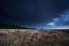 Dark stormy sky over marsh with cotton grass Stock Images