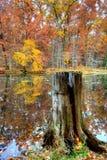 Dark Stump. Tree Stump edging a forest pond in late fall of Northwestern Ohio Stock Photos