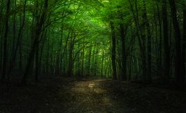 Dark summer forest path. Dark summer forest with a light at the end of the path royalty free stock image