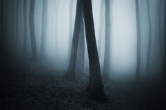 Dark surreal forest with fog Stock Image