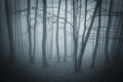 Dark surreal forest with fog on halloween Royalty Free Stock Photo