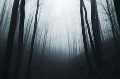 Dark surreal forest at night Stock Photos