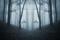 Dark symmetrical creepy forest with fog in late autumn Royalty Free Stock Photography