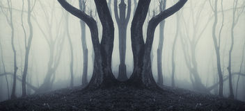 Dark symmetrical forest with strange huge tree and mysterious fog. Dark spooky creepy symmetrical forest with strange huge tree and mysterious fog Stock Image