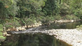 The black river in the tarkine rain forest of tasmania. The dark tannin stained waters of the black river in the tarkine rain forest of tasmania, australia royalty free stock photo