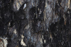 Dark texture, wood background. Natural background Royalty Free Stock Photos