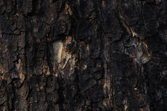 Dark texture, wood background. Natural background Royalty Free Stock Image