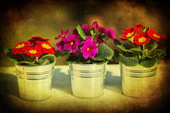 Dark textured picture of three flower pots Royalty Free Stock Photos