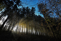 Dark themed forest. Today morning in the forest Stock Photos