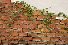 Dark tone stone wall and plants Stock Images