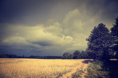 Dark Toned Landscape with Field and Moody Sky Royalty Free Stock Image