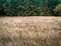 Dark toned simple forest and meadow simple nature background. Forest trees and meadow, simple natural background backdrop, without sky, nearly just duo chrome or Royalty Free Stock Photo