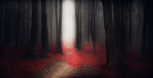 Dark trail trough a autumn forest with fog Stock Image