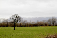 Tree in countryside field Royalty Free Stock Images