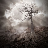 Lonely Tree with Roots Holding The Moon Royalty Free Stock Image
