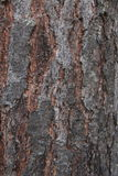Dark Tree Bark Texture. Royalty Free Stock Image