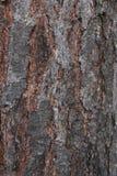 Dark Tree Bark Texture. Royalty Free Stock Image