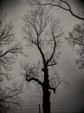Dark tree black shadow photo Royalty Free Stock Image