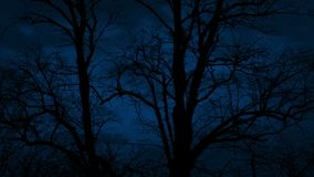 Dark Tree Bodies On Windy Night