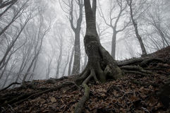 Dark tree in a frozen forest Stock Photo