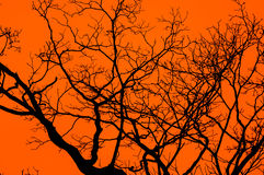 Dark Tree Stock Photo