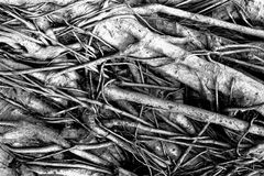 Dark tree roots stock images