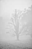 Dark tree silhouette in fog Royalty Free Stock Photography