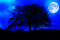 Dark tree silhouette with a glowing full moon. At midnight Stock Photography