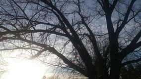 Dark tree Royalty Free Stock Images