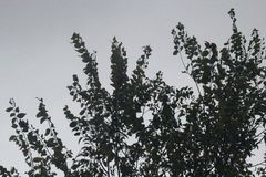 Dark Tree Stock Image
