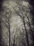 Dark trees Royalty Free Stock Photography