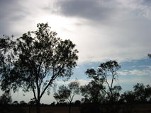 Dark trees. Under cloudy skies at the australian outback Royalty Free Stock Images