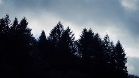 Dark Trees On Dramatic Moving Sky stock video footage