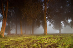 Dark trees in the fog Royalty Free Stock Photography