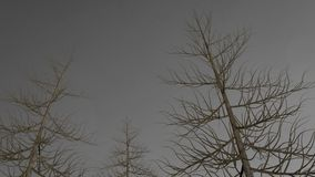 Dark trees without leaves in front of gray sky. Stock Image