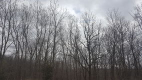 Dark Trees. Looking up into the woods on the path at the Nature Conservancy in Michigan Stock Image