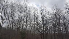 Dark Trees Stock Image