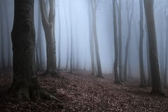 Dark trees sihlouettes with spooky mist Royalty Free Stock Photo