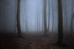 Dark trees sihlouettes with spooky mist Royalty Free Stock Image