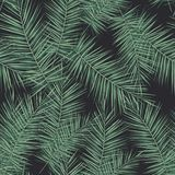Dark tropical background with jungle plants. Seamless vector tropical pattern with green palm leaves. stock illustration