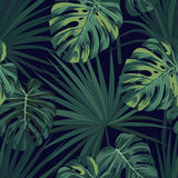 Dark tropical background with jungle plants. Seamless vector tropical pattern with green sabal palm and monstera leaves. Royalty Free Stock Image