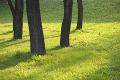 Dark trunks of trees on spring greens Royalty Free Stock Photos