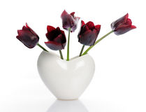 Dark tulips Royalty Free Stock Photo