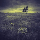 Dark valley_vintage. Vintage picture. Dark valley with a lonely tree on a skyline in a stormy weather stock photos