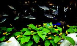 Dark van het nachtaquarium Stock Foto