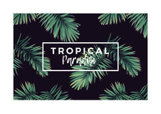 Dark vector tropical typography design with green jungle palm leaves. Royalty Free Stock Photography