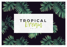 Dark vector tropical typography design with green jungle palm leaves. Stock Photos